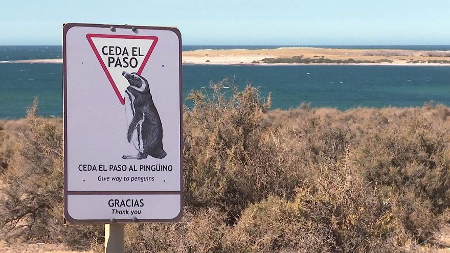Город счастливых пингвинов