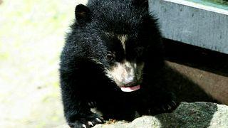 Кран застрял, медвежонок пошёл