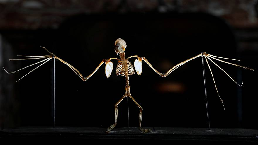 حفريات تثبت أن الخفافيش كانت تحلق في السماء منذ 33 مليون سنة