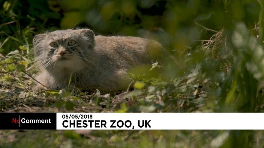 Les nouveaux locataires du zoo de Chester
