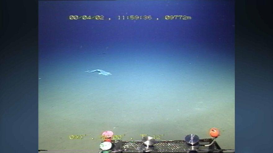 La plastica è arrivata perfino nella Fossa delle Marianne: sacchetto a 11mila metri di profondità