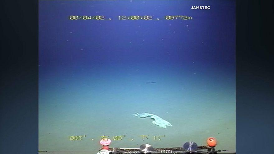 Bolsas de plástico en la fosa de las Marianas, el lugar más profundo de la Tierra
