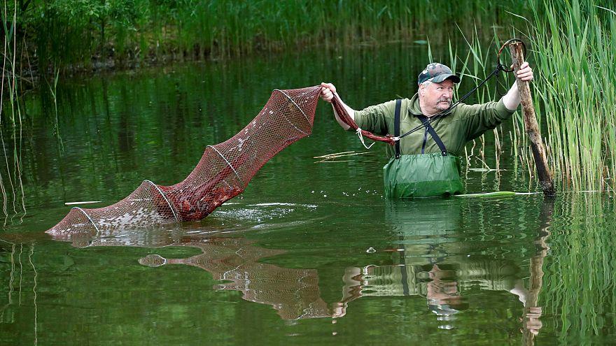 سلطات برلين ترخص صيد قشريات اجتاحت برك الحدائق العمومية