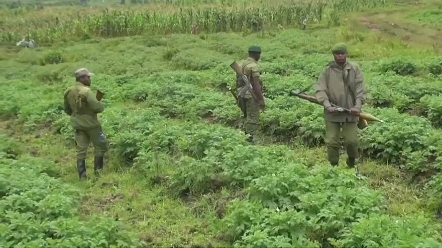 British tourists kidnapped in DR Congo released