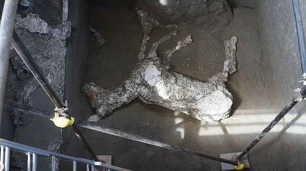 Pompeii'de binlerce yıllık taşlaşmış bir at bulundu