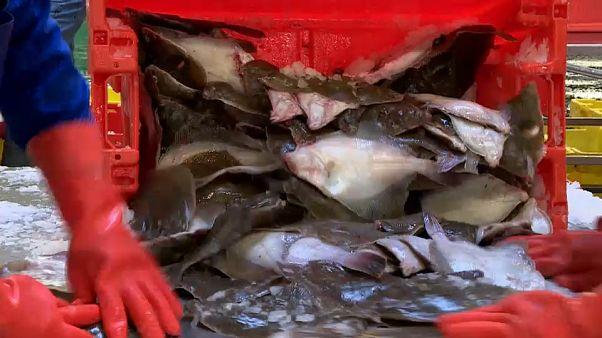 L'impatto della Brexit sul mercato ittico olandese