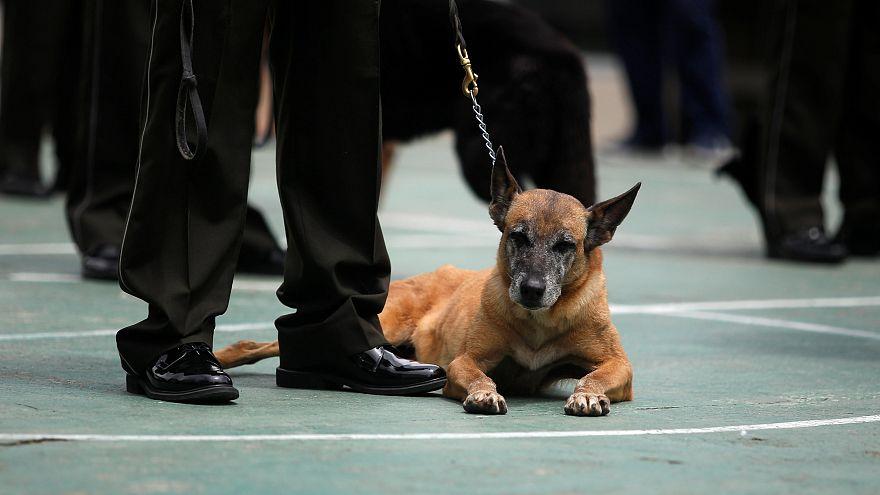 كلب بوليسي