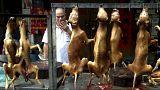 """نشطاء يدعون لوقف مهرجان أكل """"لحوم الكلاب"""" في الصين"""