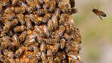 Nyertek a méhek, betiltanak három permetezőszert