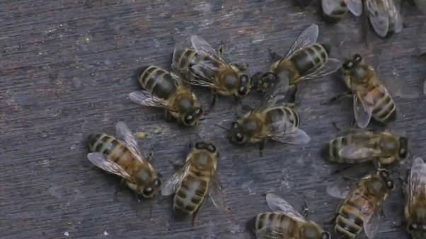 Ein Urteil für die Bienen