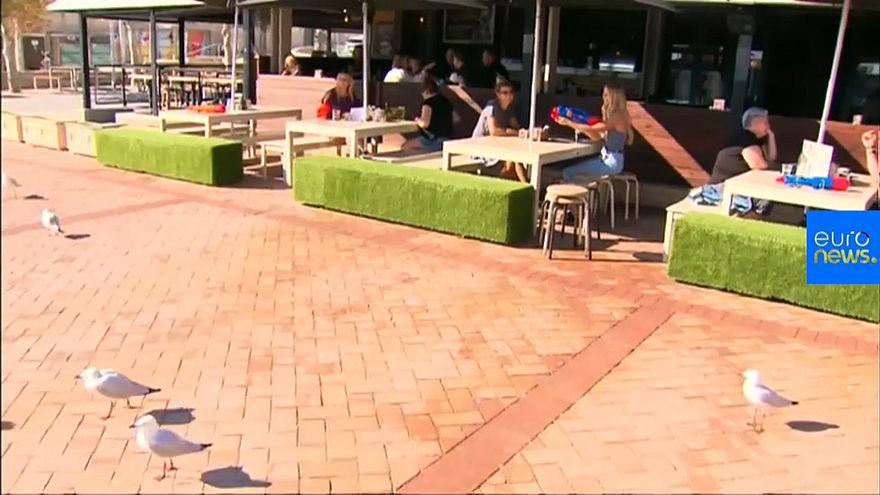 Australie : plus de pitié pour les mouettes pique-assiettes!