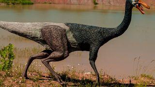 Les dinosaures, parents poules pour leurs oeufs
