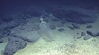 Plastic pollution 10,000 metres under the sea