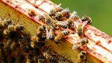 265 Milliarden pro Jahr: Warum Bienen so wichtig sind