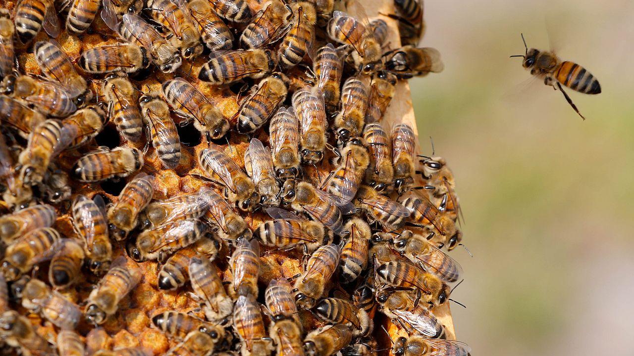 """Una """"spia"""" robot tra le api"""