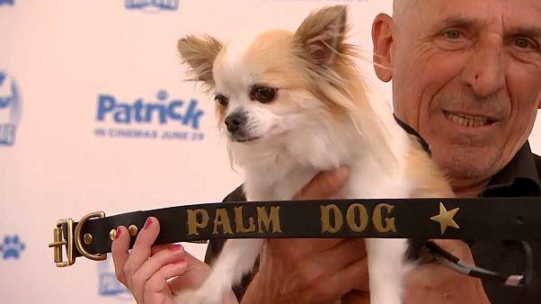 """كلب """"شيواوا"""" يفوز بجائزة السعفة الذهبية في مهرجان """"كان"""""""