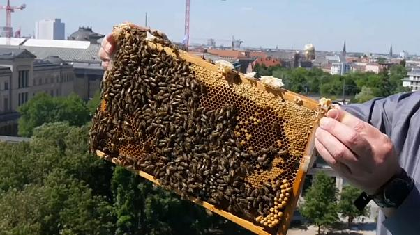 День пчелы