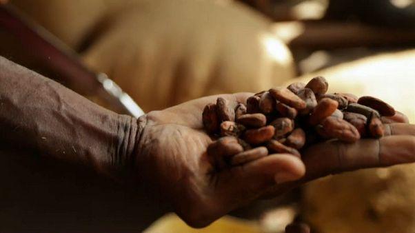 Le chocolat, or noir en voie de disparition