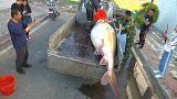 شاهد: اصطياد سمكة عملاقة تزن أكثر من نصف طن في نهر بالصين