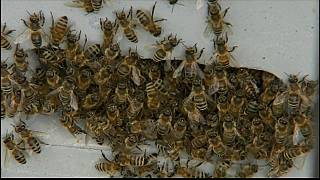 It's the first World Bee Day