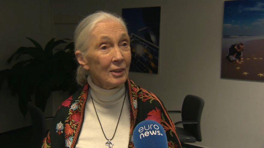 La primatóloga Jane Goodall defiende otra manera de vivir