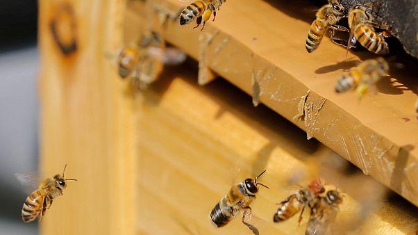 L'abeille, une amie qui nous veut du bien