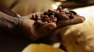 Kakao-Engpass ab 2020?