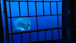 Europe's largest aquarium opens in France