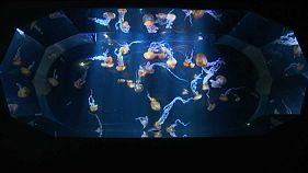 Кусочек Тихого океана в Европе