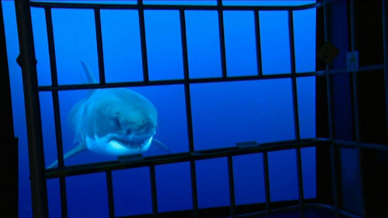 O maior aquário da Europa