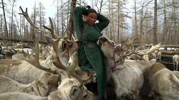 Монголия: охота вне закона