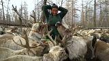 Die Dhuka in der Mongolei: Traditionen in Gefahr
