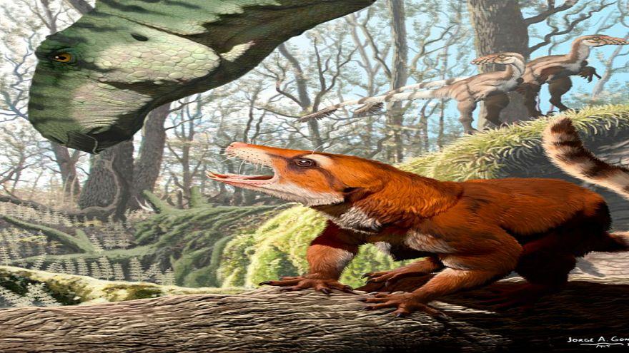 اكتشاف جمجمة حيوان في أمريكا قد تغير معتقد عمره 15 مليون سنة