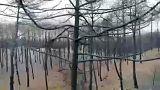 Kiégett erdő Portugáliában