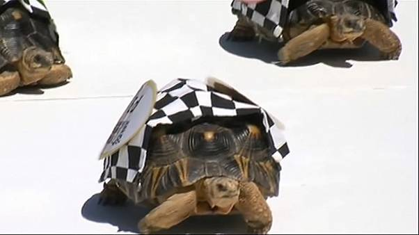 Carrera de tortugas en Indianápolis