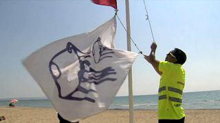 Physalia physalis, la 'carabela' que España no quiere en sus playas