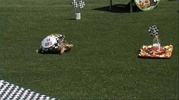 Indianapolis 500: Ed gewinnt das Rennen der Schildkröten