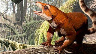 بررسی فسیل یک جانور کوچک زمان جدا شدن قارههای زمین را متحول کرد