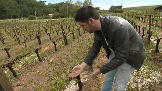 France : grêle violente dans le Sud-ouest, des vignobles ravagés