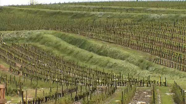 Viharkárok miatt lehet drágább a bordeaux-i bor