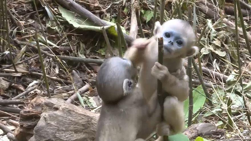 قرود في حديقة الحيوان بالصين