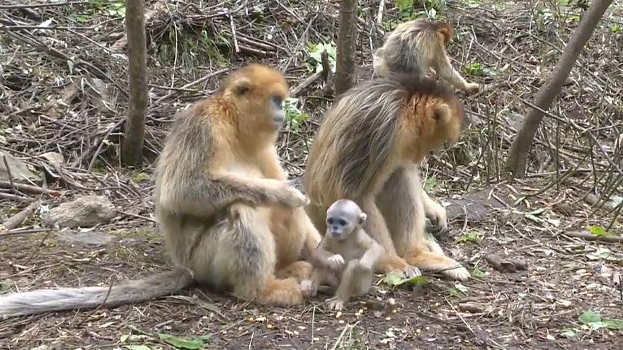 Affen sind Touristenattraktion in China