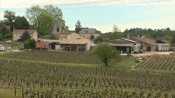 Vinyards in France's Bordeaux region hit by hail storm