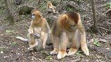 Chine : ici les singes jouent avec les visiteurs