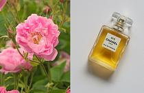 The unique flower behind Chanel No 5