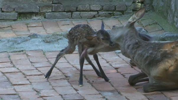 Belgrad Hayvanat Bahçesi'nin yeni misafirleri