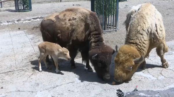 New births at Belgrade zoo