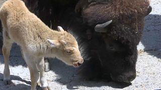 Nachwuchs im Belgrader Zoo