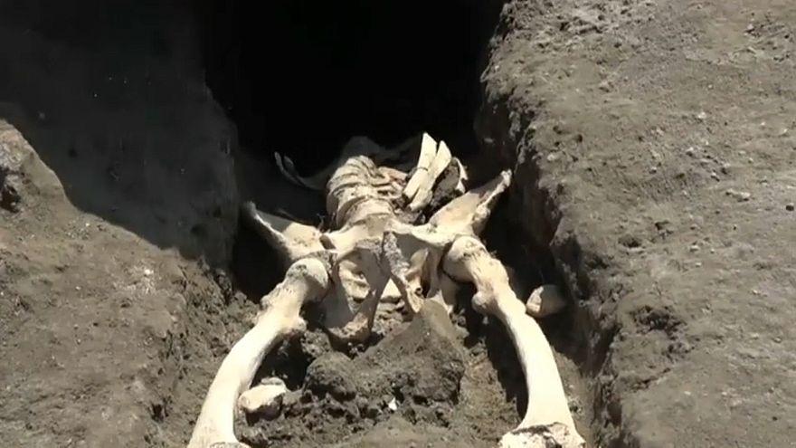 الهيكل العظمي كما وجدوه
