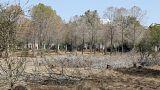 Η κλιματική αλλαγή ίσως φέρει περισσότερους καύσωνες, ξηρασία και νέες ασθένειες στην Κύπρο